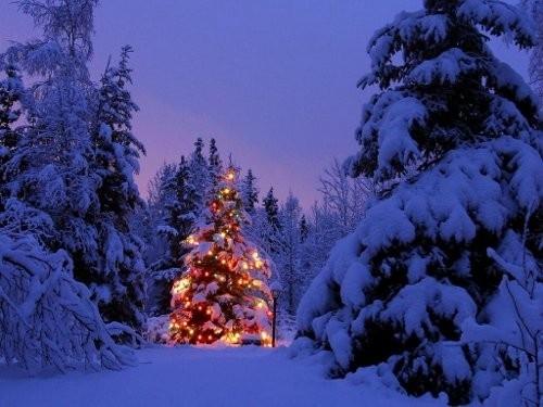 Vacanze di Natale 3