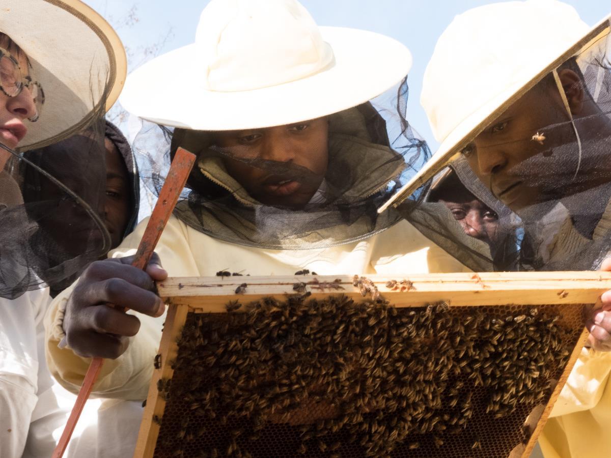 Bee My Job: il riscatto delle api
